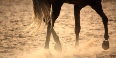Do I need a $95,000 horse?
